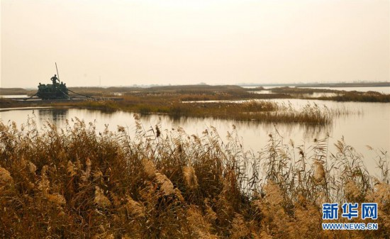 (环境)(2)内蒙古托克托县:黄河两岸秋色美